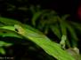 Caminata nocturna chicoral