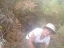 Mientras tanto Dapaviva reforestando !!!